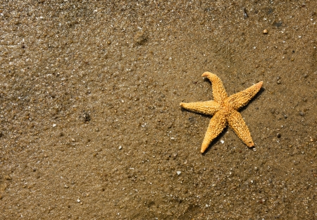 starfish on the beach, vacation memories.  photo