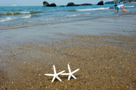 Couple of finger starfish walking on the beach. Stock Photo - 13827455