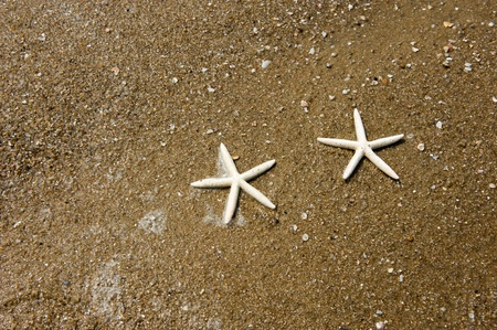 outdoor pursuit: Couple of finger starfish walking on the beach.