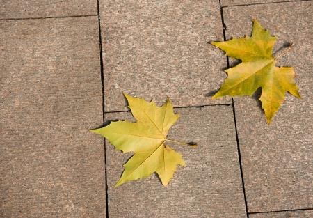 two yellow maple leaf on granite sidewalk. Stock Photo - 13954925