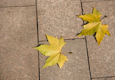 two yellow maple leaf on granite sidewalk.  Stock Photo - 13954925