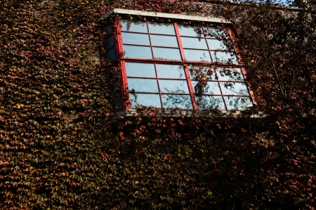 Windows on a wall covered with grapes vine. photo