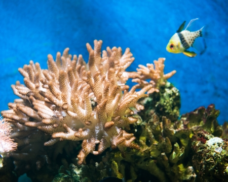 pristine corals: A coral reef with beautiful coral and fish.