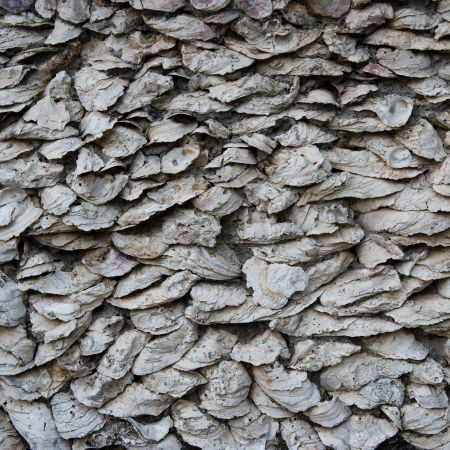 Wall of seashells mixed with cement close up. Stock Photo - 14048945