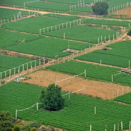 homesteads: Aerial shot of farmland in China.