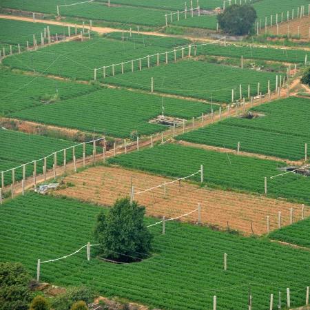 aerial animal: Aerial shot of farmland in China.