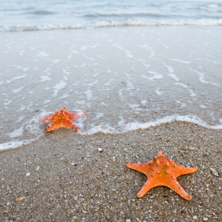 Pair of starfishes on a beach sand photo