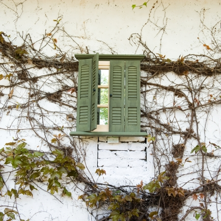 white wall with dry vines and green window on it.  photo