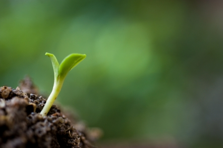 Small plant on pile of soil in the garden