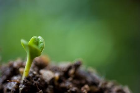 Pequeña planta en la pila de tierra en el jardín