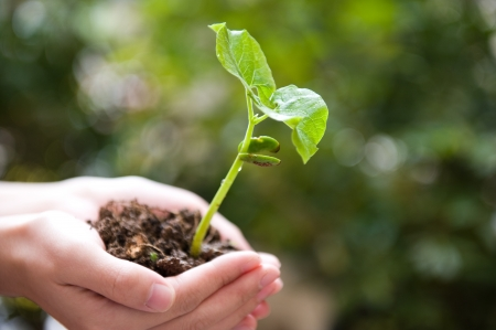 plant in the hand on green background  Stock Photo - 14176736
