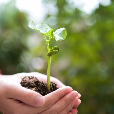 bean sprouts: plant in the hand on green background