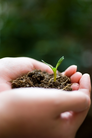 plant in the hand on green background  Stock Photo - 14177035