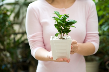 Young woman holding a plant in pot photo