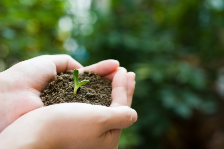 plant in the hand on green background Stock Photo - 14176724