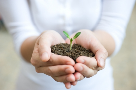 Young woman holding young plant in her hands.  photo
