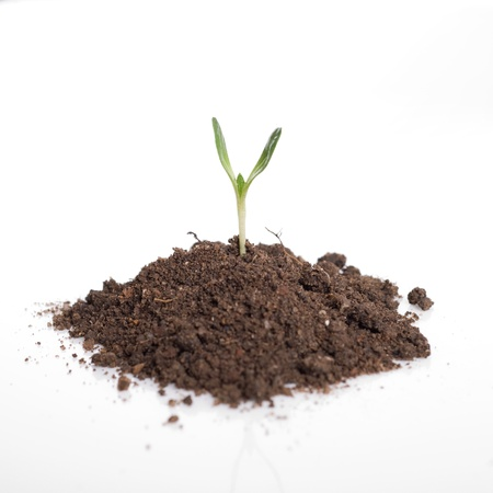 manure: Seedling green plant in soil isolated on white