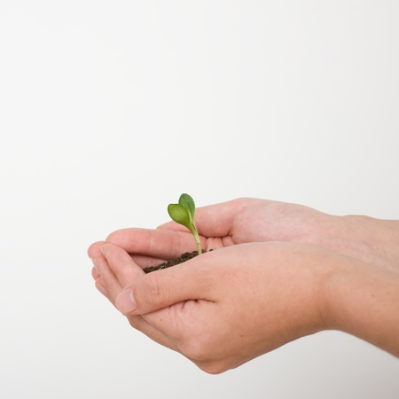 Young plant in hand over white Stock Photo - 14174090