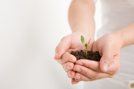 Young plant in hand over white Stock Photo - 14174361