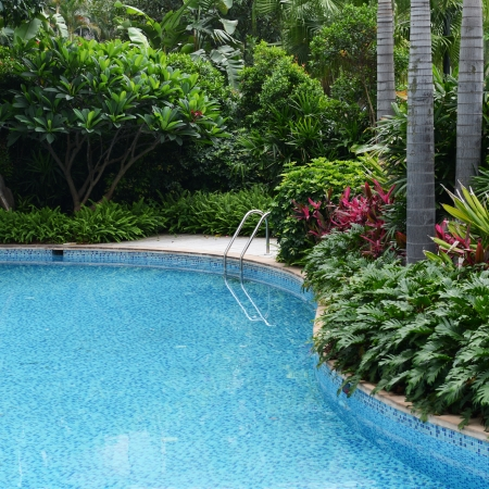 swimming pool home: Clear blue water in large swimming pool with trees.