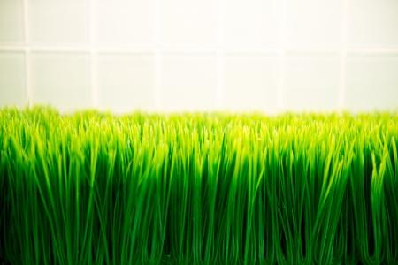 herbage: fresh spring green grass.