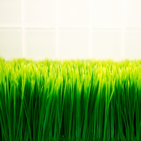 verse lente groene gras.