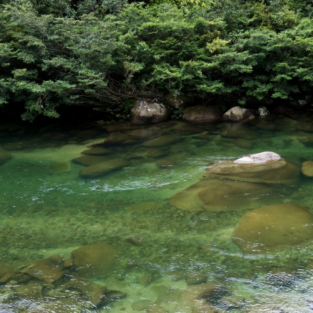 fresh green and stream in a forest