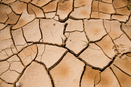 arid climate: cracked clay ground into the dry season