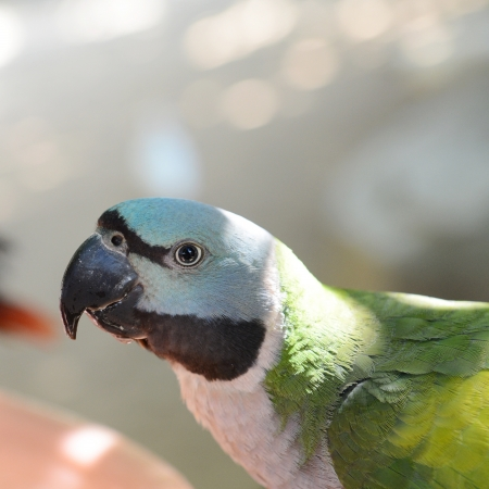 parrot sitting in the shadow.  photo