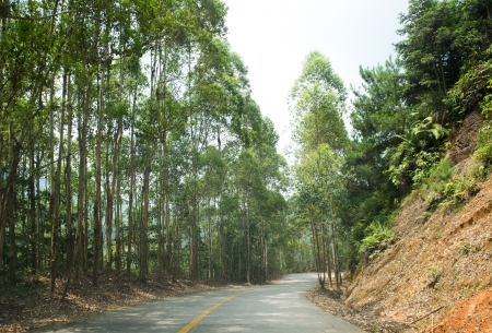 Countryside road with trees on both sides. photo