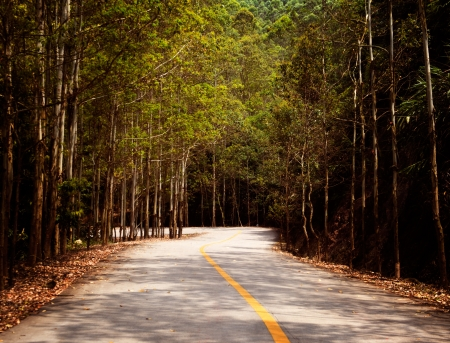 both sides: Countryside road with trees on both sides. Stock Photo