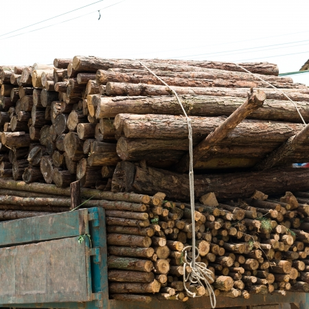 delivers: A truck delivers its load to a sawmill in China.  Stock Photo
