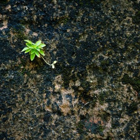 new plant from dark moss. photo