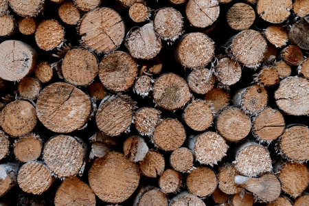 piled tree trunks close up Stock Photo - 17575435