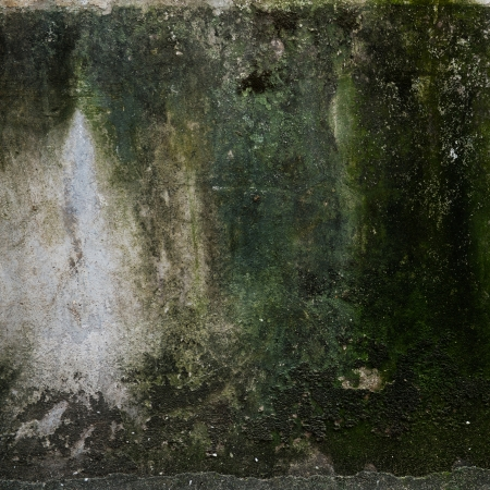 abstract the old grunge concrete wall for background.  photo