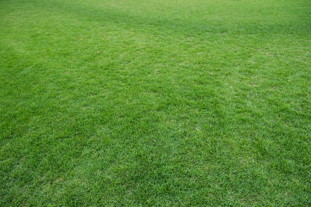 blades of grass: natural green trimmed grass field background for sports. Stock Photo