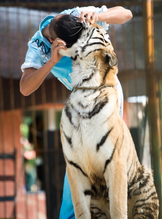 snouts: Trainer and tiger Stock Photo