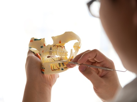 Dentist holding teeth model in his office photo