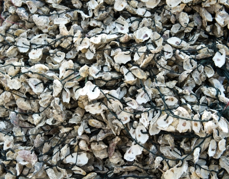 shuck: Wall of seashells mixed with cement close up. Stock Photo