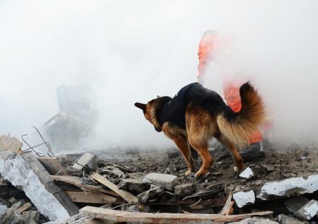 Search and rescue forces search through a destroyed building with the help of rescue dogs.  Stock Photo