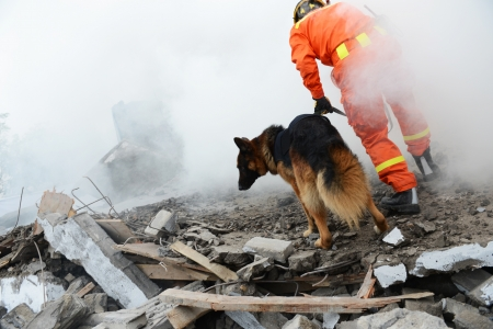 Search and rescue forces search through a destroyed building with the help of rescue dogs.  photo