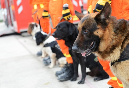 The dogs in a row are being trained to rescue.