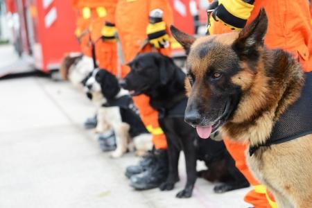 Psi v řadě jsou školeni na záchranu.