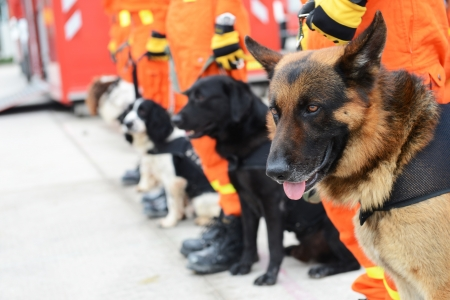 trained: The dogs in a row are being trained to rescue.