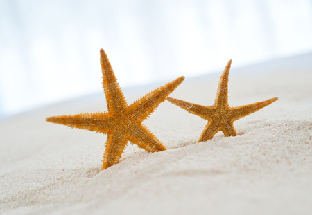 Two beautiful starfish on bright sand. photo