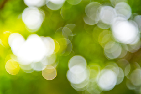 natural green background with bokeh circles. photo