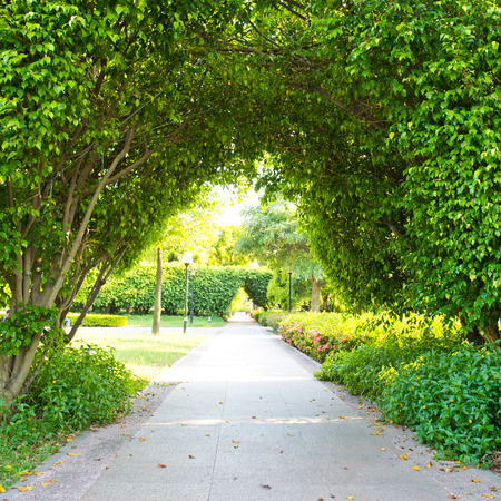 leading the way: Green archway in the park at summer. Stock Photo