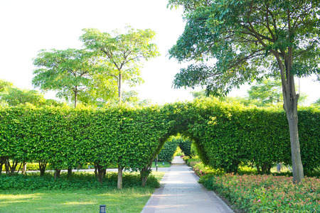 garden gate: Green archway in the park at summer. Stock Photo