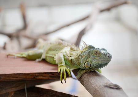 close up shot of lizard. photo
