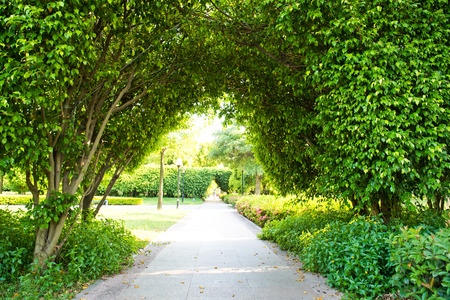 paved: Green archway in the park at summer. Stock Photo